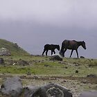 Wild Horses at Cotopaxi by buttonovski