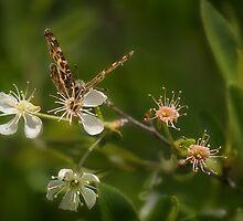 Spring wonderland in forest by Oleksandr Savruk