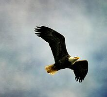 Free Bird by Lois  Bryan