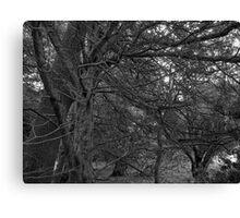 Chillingham Woods Canvas Print