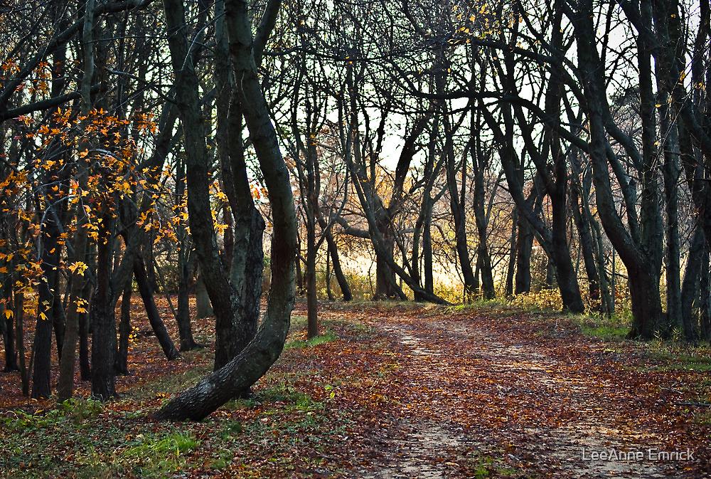 Sandy Point Path by LeeAnne Emrick