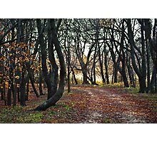 Sandy Point Path Photographic Print