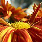 fall flower by SKNickel