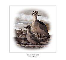 BEACH THICK-KNEE #3 Photographic Print