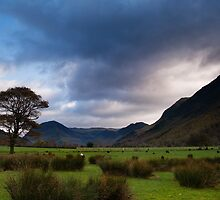 THAT BUTTERMERE TREE by STEVE  BOOTE