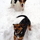 Jake & Charlie playing in the snow by Terry Senior