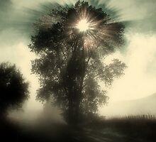 Otane Fog by Peter Kurdulija