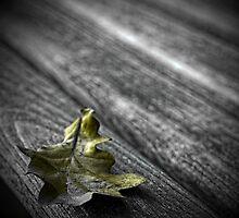 Autumns Repose by Rick Haigh