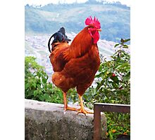 Gallo (Rooster) Photographic Print