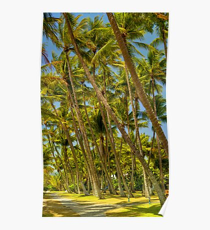 PalmCove - Coconut Trees at Midday 4 Poster