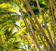 PalmCove - Coconut Trees at Midday 5 by Geoffrey Thomas
