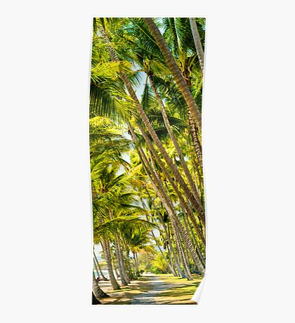 PalmCove - Coconut Trees at Midday 5 Poster