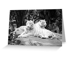 Two  White Siberian Tigers  Greeting Card