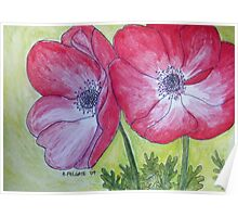 Two Red Anemones Poster