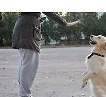 Hire The Best Dog and Cat Training Treats by Our Expert Dog and Cat Trainers by johnmark8978