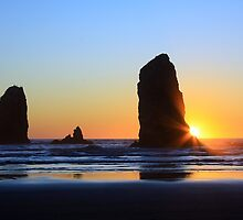 Canon Beach Needles by Anne McKinnell