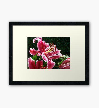Lifeline Lily Framed Print