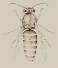 Yellowjacket in pencil by Pete Janes