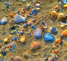 Seashells Aglow by Michael Rubin