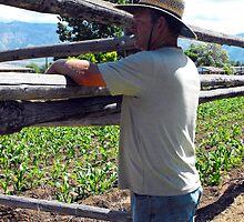 The  Gentleman Farmer by Jan  Tribe