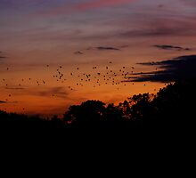 Home to Roost by Carol Dawes