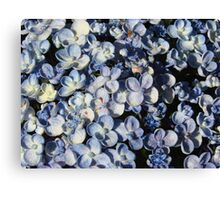 Light Blue Hydrangea-(Floral Macro) Canvas Print