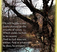Psalm 3:1 by vigor