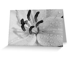 White Date Lilly Drops-(Flower Close Up)-B&W Greeting Card