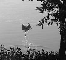 Spoonbill Splash-(B&W) by Martice