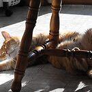 Oh!!! The sun feels soooooooo good!!! by Tracy Wazny