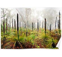 Grass Trees, Anglesea,Great Ocean Road,Australia.  Poster