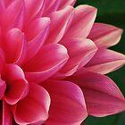 Beautiful Petal Pusher by Kathy Yates