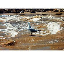 SEAGULLS WAVES  Photographic Print