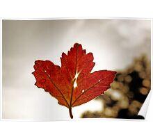 Sunrise Through a Leaf Poster