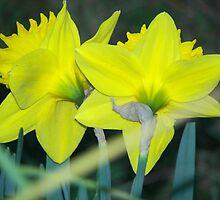 Sweet Pair by gardendaff