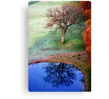 Mirror, mirror, who is the most beautiful of all.... Canvas Print