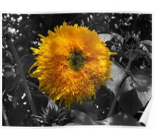 Spike the Sunflower Poster