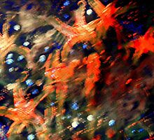 Fireworks by jimofozz