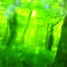 Green Wood Serie n°5 by edend