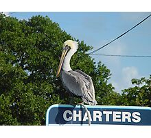 Pelican in the Florida Keys Photographic Print