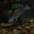 Turtle @ Timmy's by lozonline