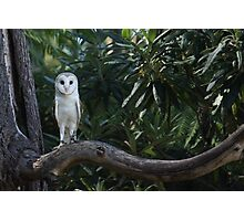 it's a hoot Photographic Print