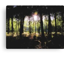 Coldharbour Forest in Surrey Canvas Print