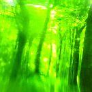 Green Wood Serie n°6 by edend