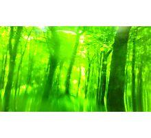 Green Wood Serie n°6 Photographic Print