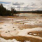 Norris Geyser Basin, Yellowstone by Olga Zvereva