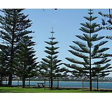 Victor Harbor Pines Photographic Print