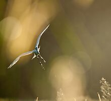 Flight of the Egret by David de Groot