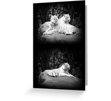 WHITE SIBERIAN TIGERS ON ROCK  Greeting Card