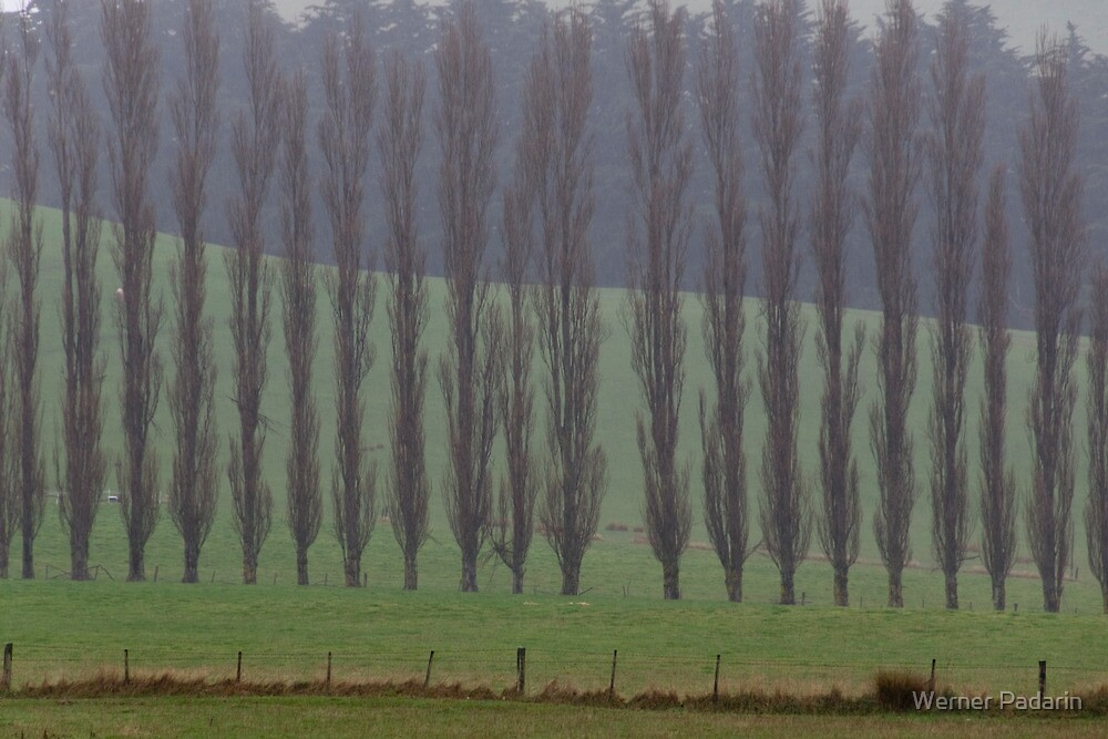 Misty by Werner Padarin